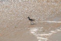 Strandloper die in ondiep water van de oceaan op een strand lopen stock foto