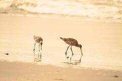 Strandloper op strand Stock Fotografie
