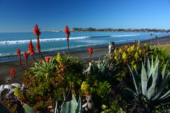 Strandnaher Garten in Westshore, Hawkes-Bucht, Neuseeland Stockbilder