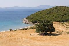strandoak Fotografering för Bildbyråer