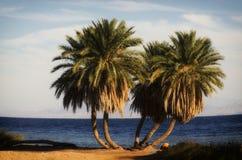 Strandpalmen Stock Afbeeldingen