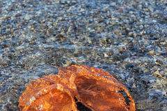 Strandpantoffel unter dem Wasser Stockfotos