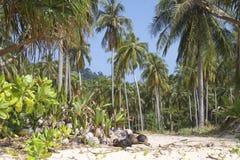 strandparadis thailand Royaltyfria Bilder