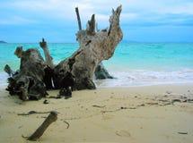 strandparadis thailand v Royaltyfri Bild