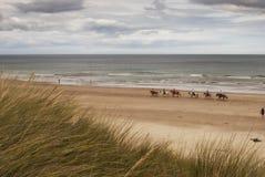 Strandpferdenreiten Stockfoto