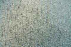 strandporslinfujian xiapu En elasticitet av stranden p? det Xiapu l?net av det Fujian landskapet i s?dra Kina fotografering för bildbyråer