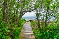Strandpromenad Forest Trees Padnaram Dartmouth Massa för strandhavbana Fotografering för Bildbyråer