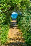 Strandpromenad Forest Trees Padnaram Dartmouth Massa för strandhavbana Royaltyfria Bilder