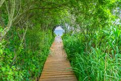 Strandpromenad Forest Trees Padnaram Dartmouth Massa för strandhavbana Arkivbild