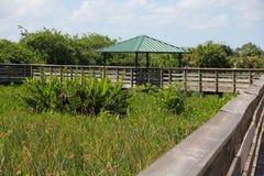 Strandpromenad gröna Cay Wetlands Royaltyfri Fotografi