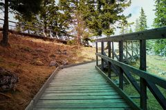 Strandpromenad i alpina trän Arkivbilder