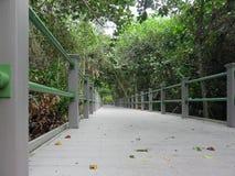 Strandpromenad i Bailey Homestead Preserve i Sanibel Florida royaltyfria bilder