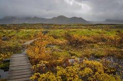 Strandpromenad i den Skaftafell nationalparken Arkivfoton