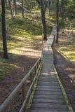 Strandpromenad i skog Fotografering för Bildbyråer