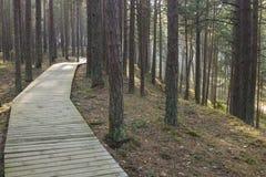 Strandpromenad i skog Royaltyfria Foton