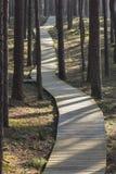 Strandpromenad i skog Royaltyfri Bild