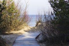 Strandpromenad i skog Arkivfoto