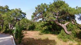 Strandpromenad och omgeende naturlig träd och flora Royaltyfri Foto