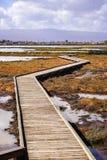 Strandpromenad till och med Alviso träsk, San Jose, södra San Francisco Bay, Kalifornien arkivbilder