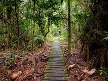 Strandpromenad till och med djungeln i den Bako nationalparken, Borneo, Malaysia Arkivbilder