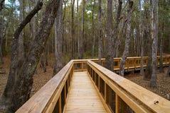 Strandpromenad till och med ett Florida Tupeloträsk arkivbild