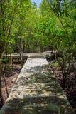 Strandpromenad till och med mangrovarna Royaltyfri Fotografi