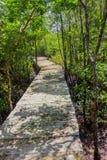 Strandpromenad till och med mangrovarna Royaltyfri Bild