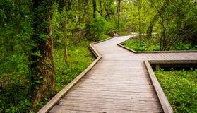 Strandpromenadslingan till och med skogen på urskogen parkerar arkivfoto