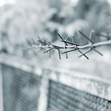 Strands of barbed wire against gray background Stock Photo