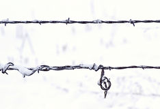 Strands of Barbed Wire Fence in Snow Stock Images