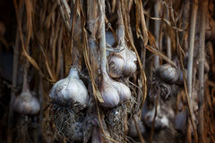 Strands of freshly dried garlic Stock Photography