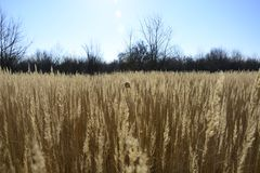 Strands of grass in the wind. Strands of old grass in the wind Stock Photography