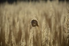 Strands of grass in the wind. Strands of old grass in the wind Stock Image
