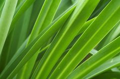Strands of Green. Green Leaves Royalty Free Stock Images