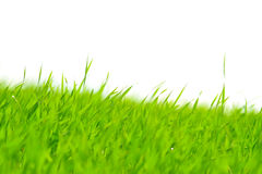 Strands of green grass Royalty Free Stock Images