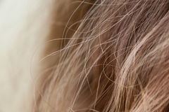 Strands of light brown hair. Brunette or light brown hair with focus on individual strands royalty free stock image