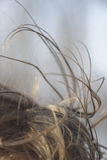 Strands of windswept hair. Strands of windswept brown hair Royalty Free Stock Photos
