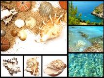 strandsamlingsferie Arkivbild