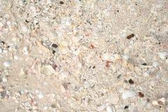 Strandsand med skal Royaltyfri Bild