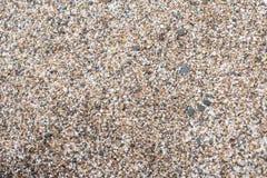 Strandsand och skalsandyttersida Royaltyfri Fotografi