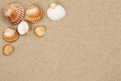Strandscène in de zomervakantie met zand, overzeese shells en copyspac Stock Afbeeldingen