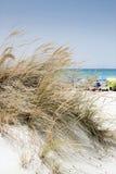 Strandscène met wild gras op de voorzijde en het overzees in de rug Stock Foto's