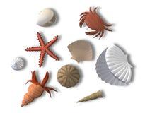 Strandschepselen Royalty-vrije Stock Afbeeldingen