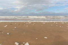 Strandschuim 1 Egmond aan Zee, Nederland stock afbeelding