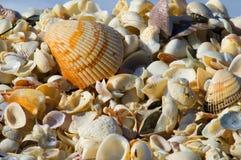Strandshells van kleur Royalty-vrije Stock Foto