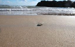 Strandshoreline med skalhorisontalsned boll Royaltyfri Bild