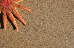 strandsjöstjärna Royaltyfri Foto