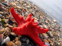 strandsjöstjärna Royaltyfri Bild