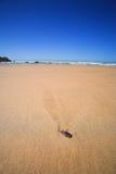 strandskal Arkivbilder