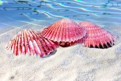 strandskal Royaltyfri Foto